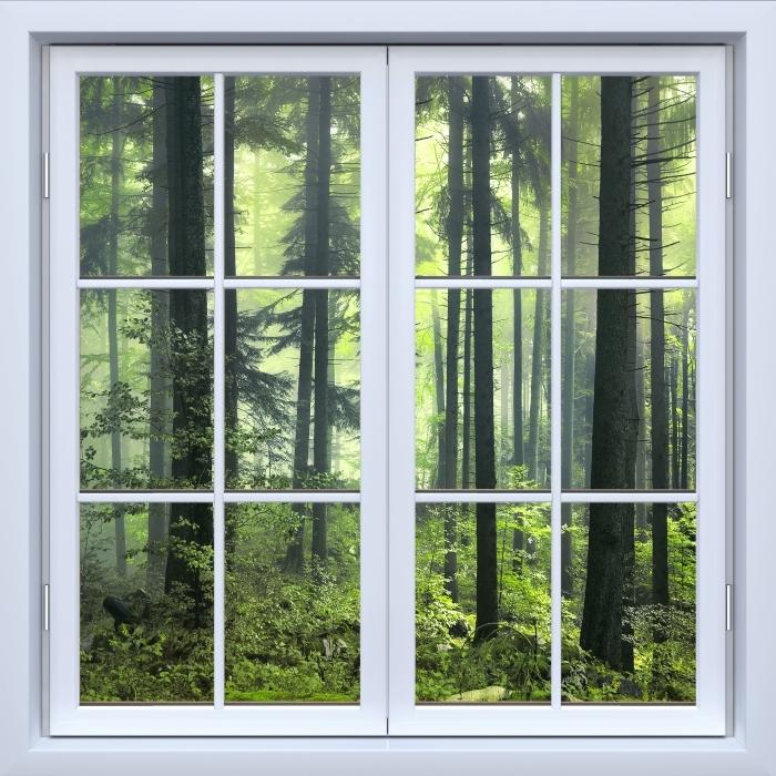 Papier peint vinyle Blanc fenêtre fermée - mystérieuse forêt sombre - La vue à travers la fenêtre