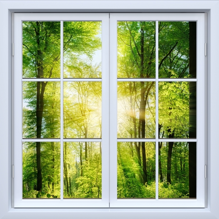 Vinyl-Fototapete Weiß Fenster geschlossen - Wald - Blick durch das Fenster