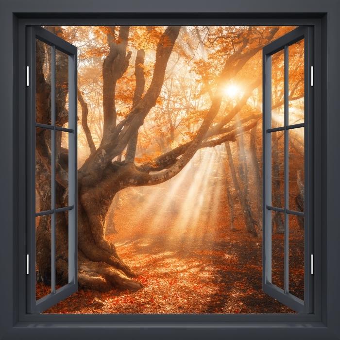 Papier peint vinyle Fenêtre Noire Ouverte - Les Arbres Et La Lumière Du Soleil - La vue à travers la fenêtre