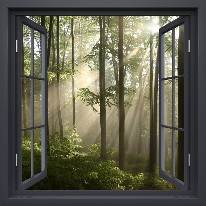 Vinyl Fotobehang Black raam open - Mistige ochtend in bos - Uitzicht door het raam