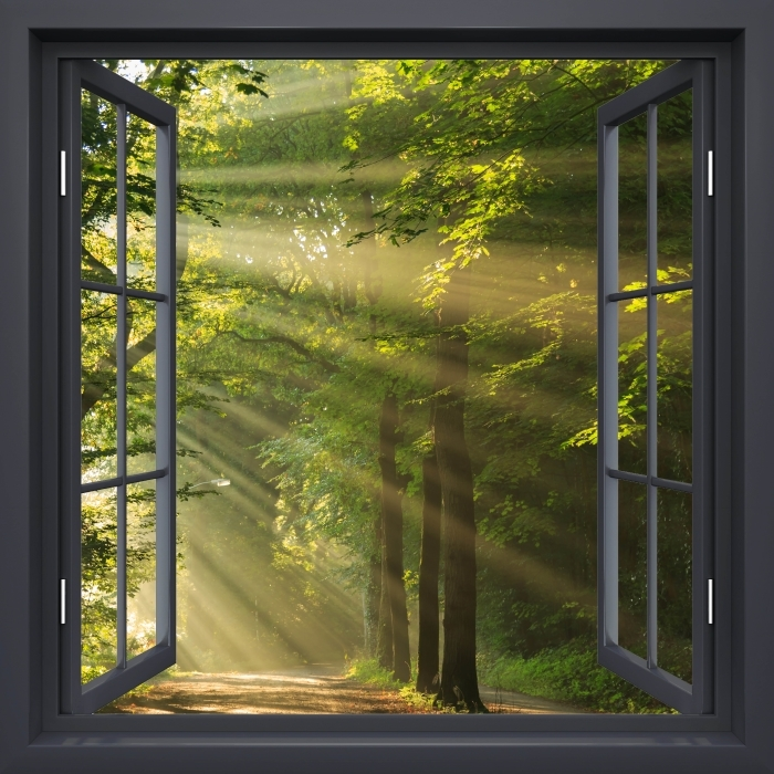 Fototapeta zmywalna Okno czarne otwarte - Promienie słońca w lesie - Widok przez okno