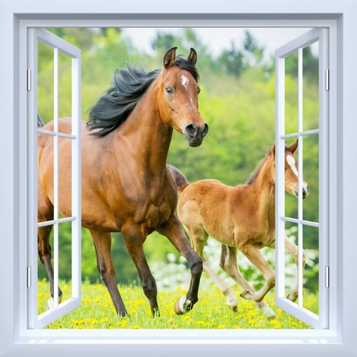 Fototapeta winylowa Okno białe otwarte - Konie w galopie - Widok przez okno