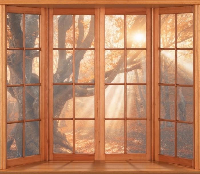 Fototapeta winylowa Taras - Drzewa i promienie słoneczne - Widok przez okno