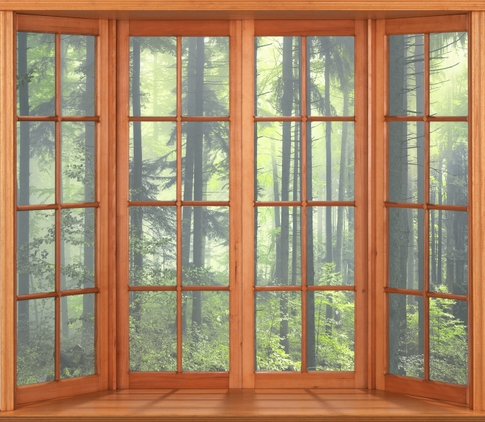 Vinyl Fotobehang Terras - Mysterieuze donker bos - Uitzicht door het raam