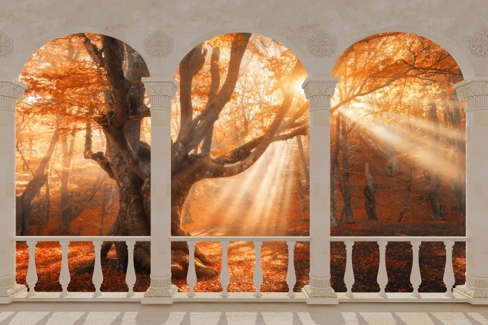 Vinyl-Fototapete Terrasse - Bäume und Sonnenlicht -