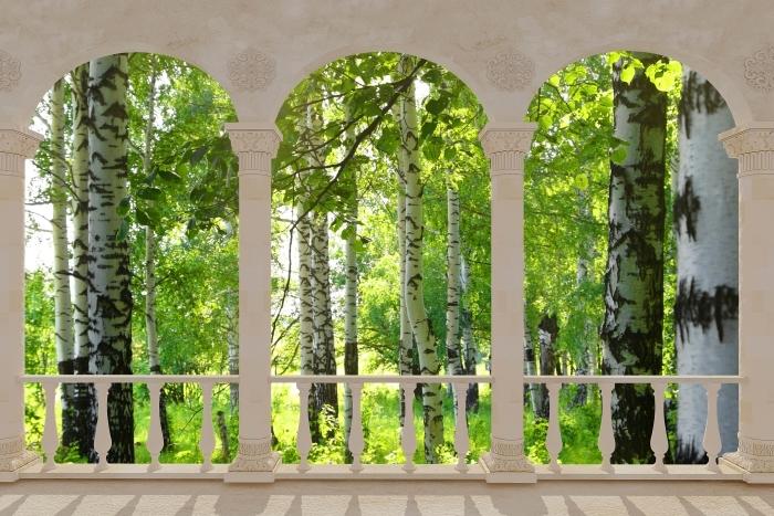 Papier peint vinyle Terrasse - été. les forêts de bouleaux. -