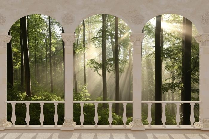 Papier peint vinyle Terrasse - Foggy matin dans les bois -