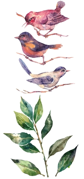Leaves and birds Sticker set - Sticker sets