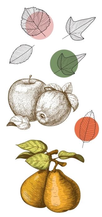 Jesienne owoce Zestaw naklejek - Zestawy naklejek