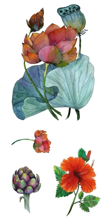 Piękne kwiaty Zestaw naklejek - Zestawy naklejek