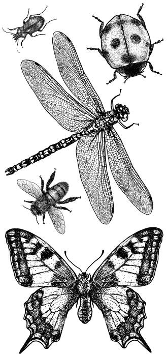 Insekten Aufkleber-Set - AUFKLEBER-SETS