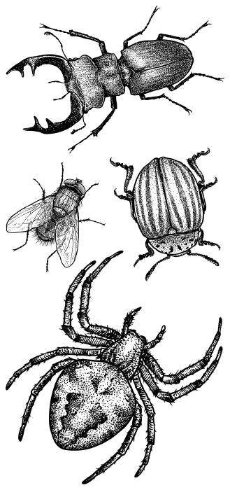 Insekten im Wald Aufkleber-Set - AUFKLEBER-SETS