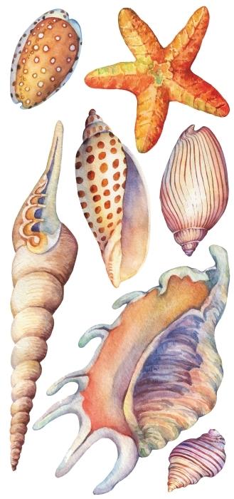 Muscheln am Meer Aufkleber-Set - AUFKLEBER-SETS