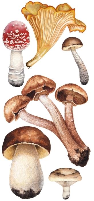 Mushrooms Sticker set - Sticker sets