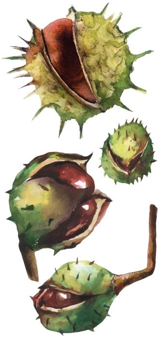 Chestnuts Sticker set - Sticker sets