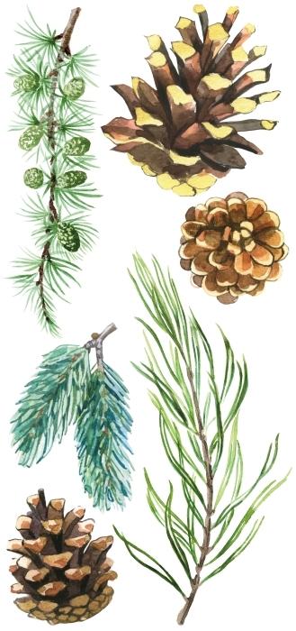 Szyszki w lesie Zestaw naklejek - Zestawy naklejek