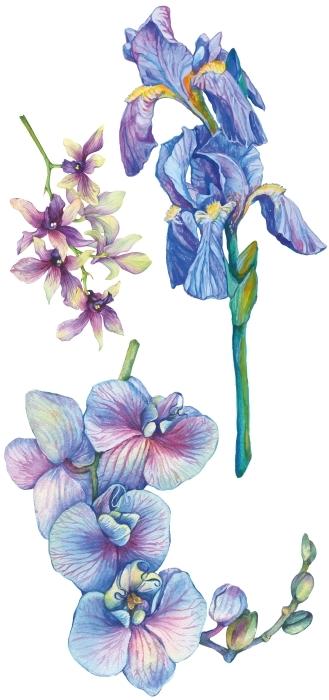 flores azuis Conjunto de autocolantes - CONJUNTOS DE AUTOCOLANTES