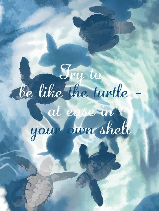 Papier peint lavable Essaye d'être comme la tortue - à l'aise dans ta propre carapace. Bill Copeland -