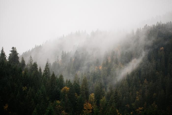Vinyl Fotobehang Bos met mist over de bergen - Bossen