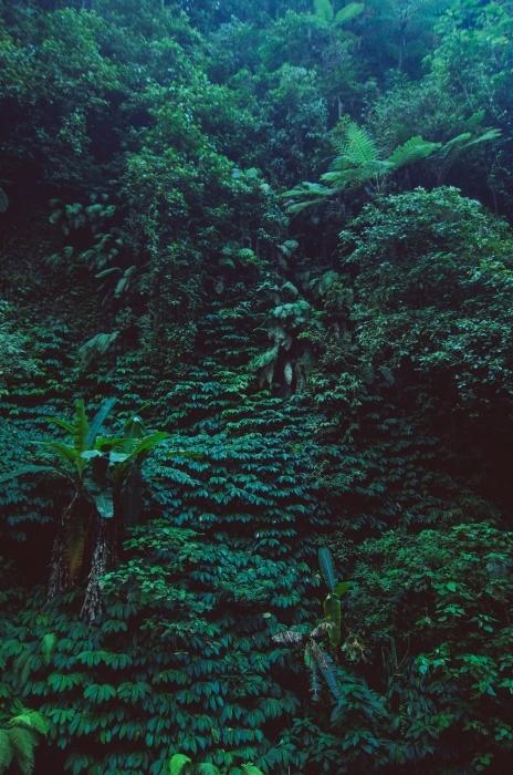 Papier peint vinyle pluie de forêt tropicale - Forêt