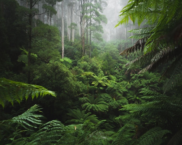 Vinyl Fotobehang Lush Rainforest met ochtendmist - Bossen