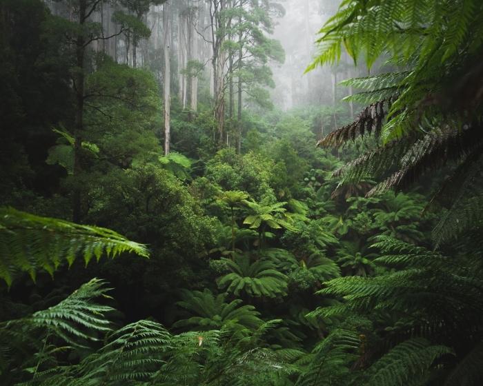 Mural de Parede em Vinil Exuberante floresta com névoa da manhã - Florestas
