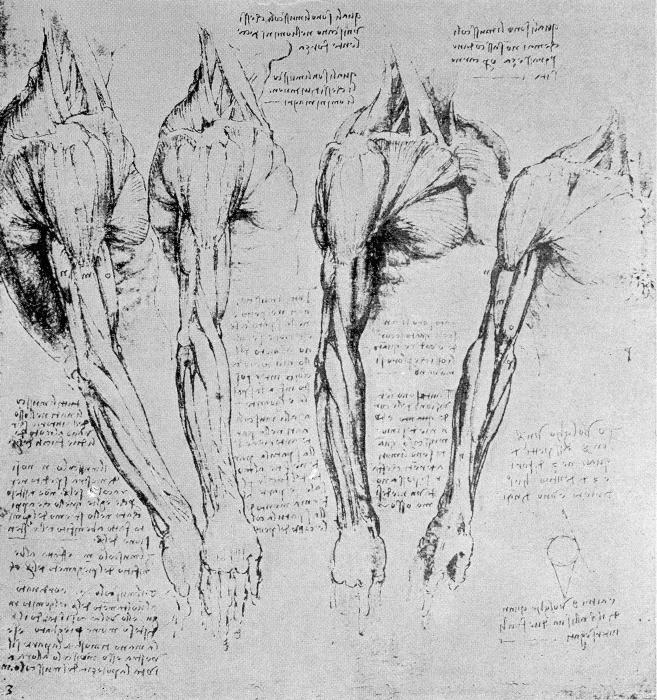 Papier peint vinyle Léonard de Vinci - Étude des bras - Reproductions