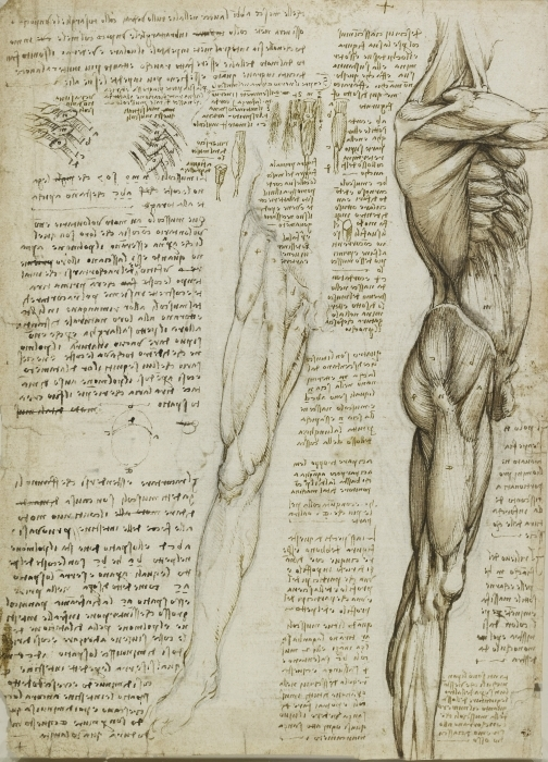 Fototapeta winylowa Leonardo da Vinci - Studium anatomiczne - Reprodukcje