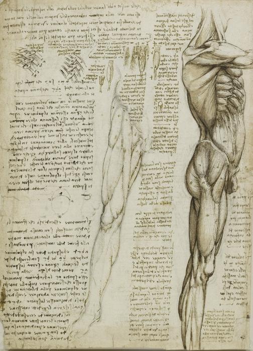 Naklejka Pixerstick Leonardo da Vinci - Studium anatomiczne - Reprodukcje