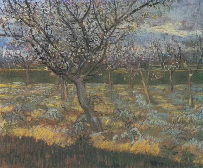 Papier peint vinyle Vincent van Gogh - Verger avec des arbres d'abricot en fleurs - Reproductions
