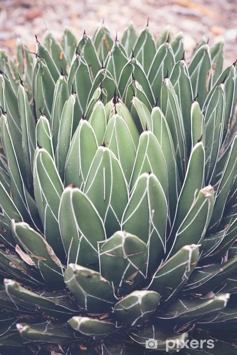 Pixerstick Sticker Close-up van agave vetplant, selectieve aandacht, toning - Bloemen en Planten