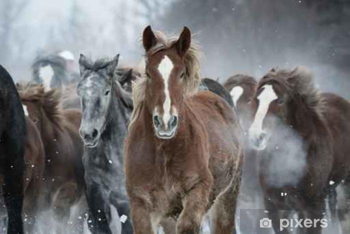Pixerstick Aufkleber 雪原 を 走 る 馬 の 集 団 - Tiere
