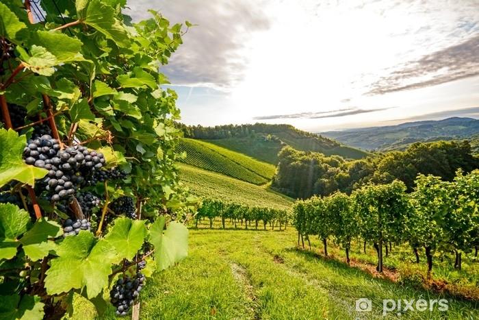 Fototapeta winylowa Winorośli w winnicy jesienią - wino z winogron przed zbiorem - Przemysł
