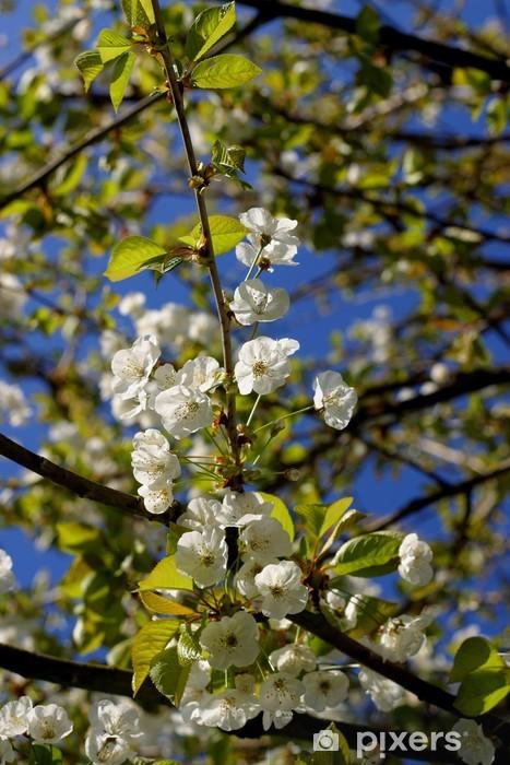 Vinyl-Fototapete Kirschblüten - Jahreszeiten