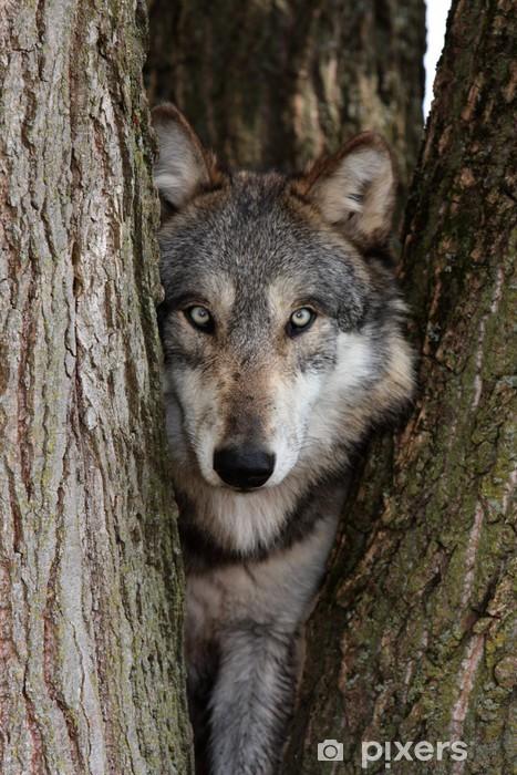 Papier peint vinyle Wolf, Canis lupus - Thèmes