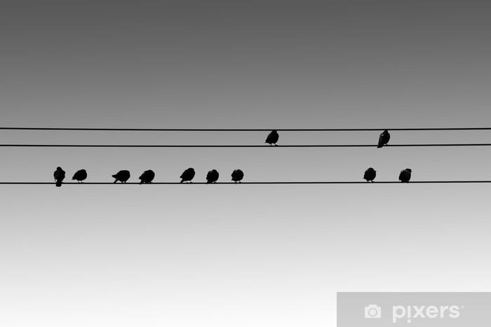 Sticker pour vitres et fenêtres Vogelsilhouetten / Die Silhouetten von nebeneinandersitzenden Vögeln auf Elektroleitungen. - Animaux