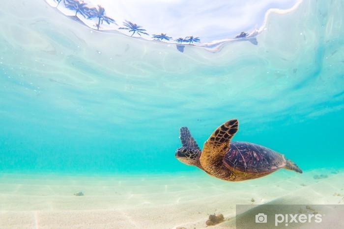 Zelfklevend Fotobehang Bedreigde Hawaiiaanse groene zeeschildpad cruises in de warme wateren van de Stille Oceaan in Hawaï - Dieren