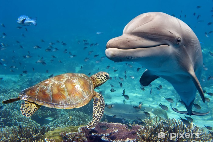 dolphin and turtle underwater on reef Self-Adhesive Wall Mural - Themes