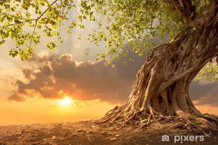 Pixerstick Sticker Prachtige boom bij zonsondergang levendige oranje met gratis exemplaar ruimte. - Landschappen