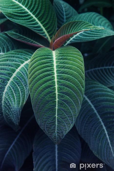 熱 帯 植物 Vinyl fototapet - Planter og Blomster