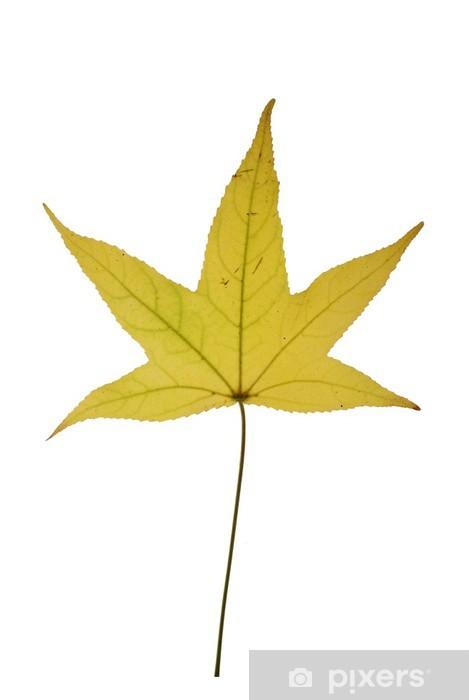 Papier peint vinyle Feuille jaunissant en automne - Saisons