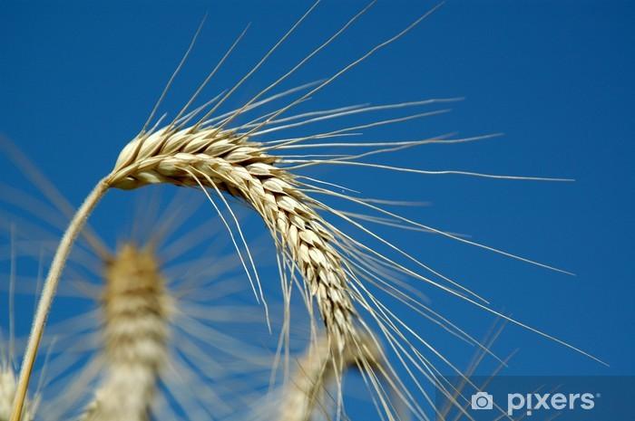 Naklejka Pixerstick Ähre - Nasiona