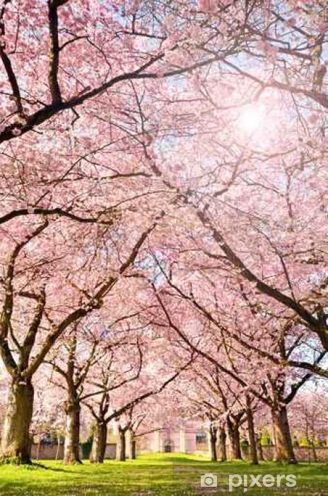 Vinyl Fotobehang Farbe des Frühlings: Garten mit Japanischen Kirschblüten - Landscapes