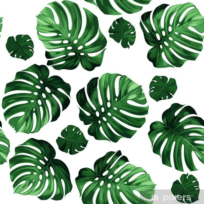 leaves monstera background Pixerstick Sticker - Graphic Resources