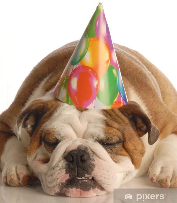 English Bulldog Wearing Birthday Party Hat Pixerstick Sticker