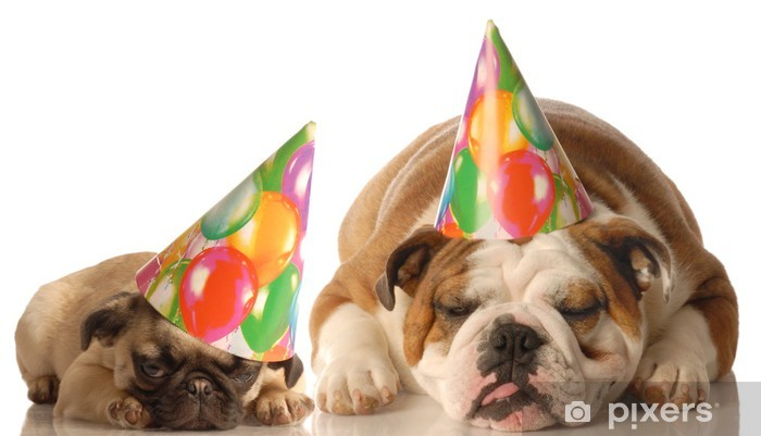 Bulldog And Pug Puppy Wearing Birthday Hat Sticker O PixersR O We