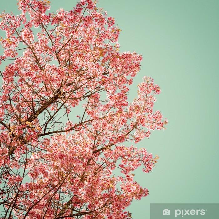 Plakat Natura tle pięknej wiśniowego drzewa różowy kwiat na wiosnę - rocznik pastelowych filtr kolorów - Rośliny i kwiaty