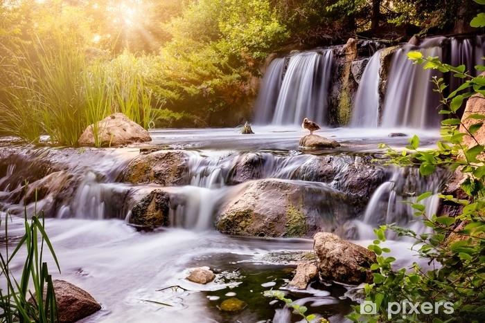 Samolepicí fototapeta Vodopád při západu slunce s divokou kachnou - Krajiny