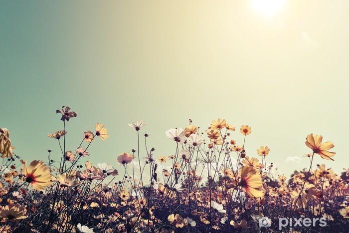 Adesivo Vintage Paesaggio Natura Sfondo Di Belle Cosmo Campo Di Fiori Sul Cielo Con La Luce Del Sole Effetto Filtro Toni Retrò Colore Pixerstick