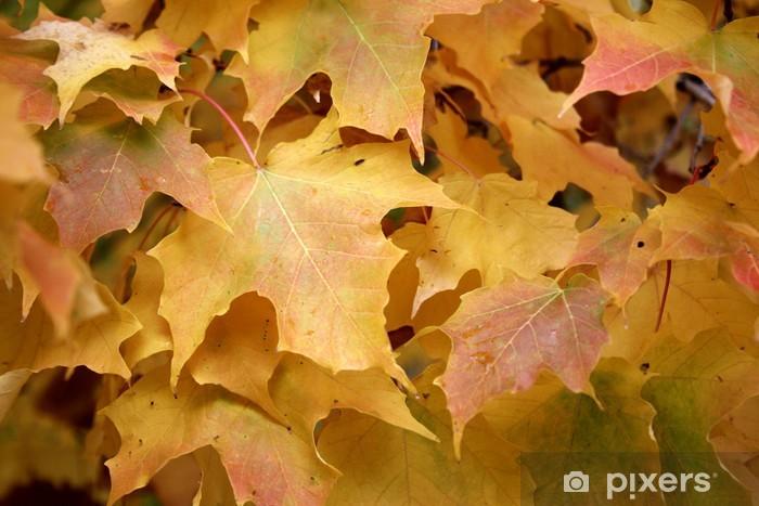 Papier peint vinyle L'automne est là - Forêt